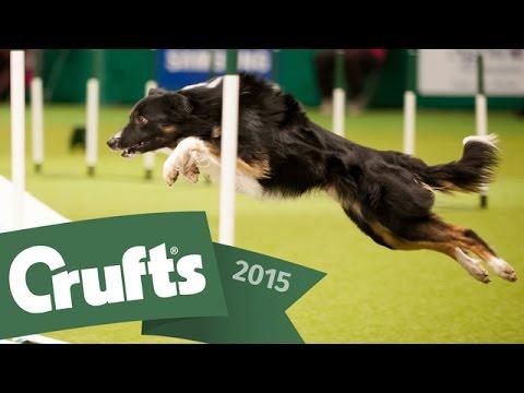 Day 1 Live | Crufts 2015