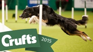 Day 1 Live | Crufts 2015