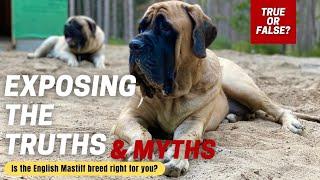English Mastiff 101 | How Well Do You Know the MASTIFF Breed? | TRUE or FALSE QUIZ