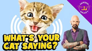 Cat Vocalizations and What They Mean