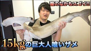 """15kgの巨大人喰いザメ""""シュモクザメ""""の腹の中がスゴかった!!"""