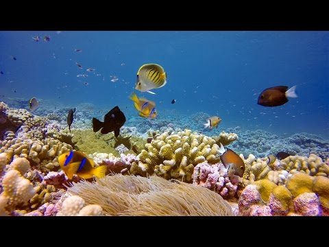 GoPro Cause: Oceanic Preservation Society