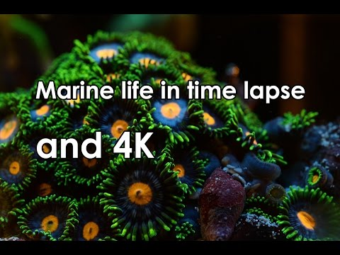 Marine life in time lapse 4K - Part 1