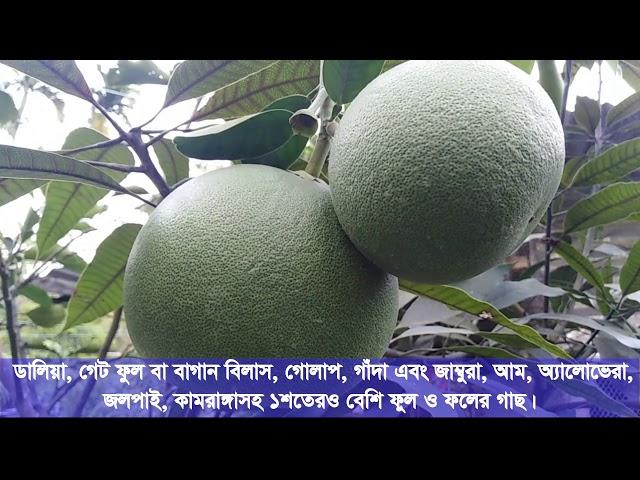 #ছাদ_বাগান