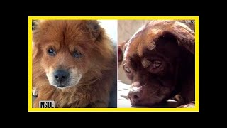 | Dog Rescue StoriesSurrendered Dogs Lost Their Will To Live Until They Were Reunited Once Again