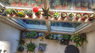 Indoor Succulent Tour December 2017