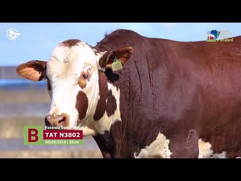 Touro N3802 - Fazenda Santa Tereza
