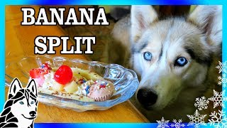 DIY BANANA SPLIT FOR DOGS | DIY Dog Treats | Snow Dogs Snacks 75