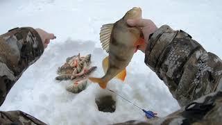 ПЕРВАЯ ЗИМНЯЯ РЫБАЛКА 19-20 НА ЛЮБИМОЙ СЕВЕРНОЙ РЕКЕ! Самая классная рыбалка! ОКУНЬ ВОРУЕТ УДОЧКУ!