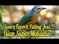 Masteran Burung Murai Batu Power Full Gacor  Mp3 - Mp4 Download