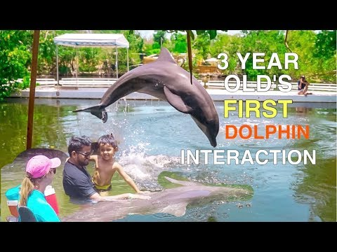 Vlog #9 : 3 Year Old's First Dolphin Interaction In Florida Keys
