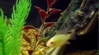 38 gallon aquarium