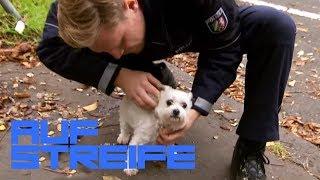 Wuff! Was machen die ganzen Hunde im Kofferraum? | Auf Streife | SAT.1 TV