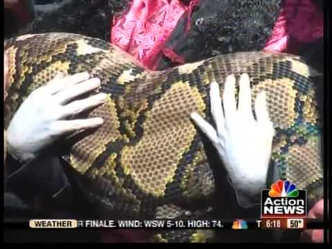 Record-breaking snake lives in KC's 'Hell'