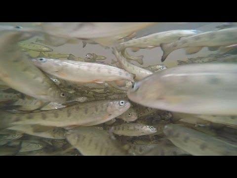 Geleceğin Balık Yetiştirme Yöntemleri