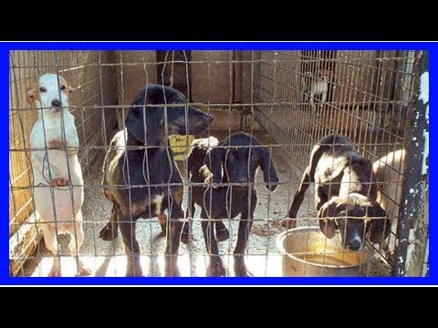 Usda blacks out animal welfare information