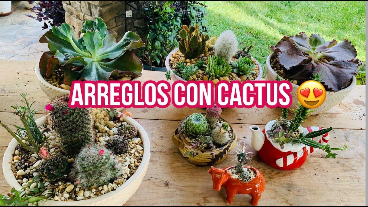Respondiendo Tus Preguntas/Sembrando Cactus y suculentas