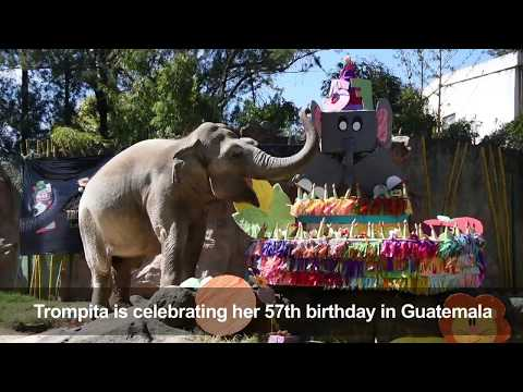 Elephant birthday party at a Guatemala zoo