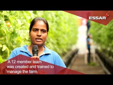 Towards a greener future: Essar Township's Hydroponic Farm