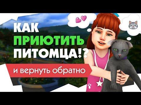 Как купить кота в симс 4