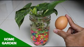 Best natural fertilizer for any water plants