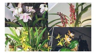 Орхидеи января и не только 😉