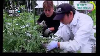 NHK「おはよう関西」で、NPO法人リライブの事業である、障害者就労継続...