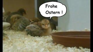 Ich wünsche dir Frohe Ostern – Ostergruß für dich – Ostergrüße zum versenden