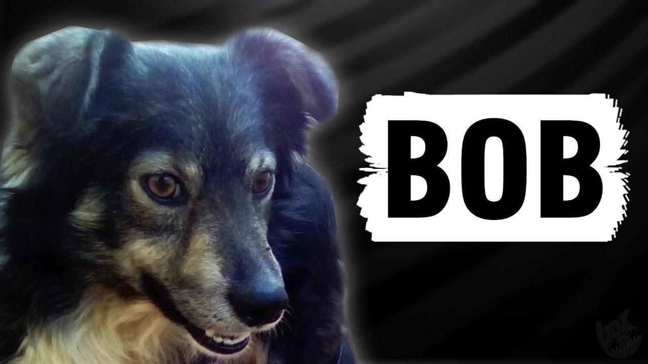 A História de Bob