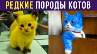 Приколы с котами. РЕДКИЕ ПОРОДЫ КОТОВ | Мемозг #273