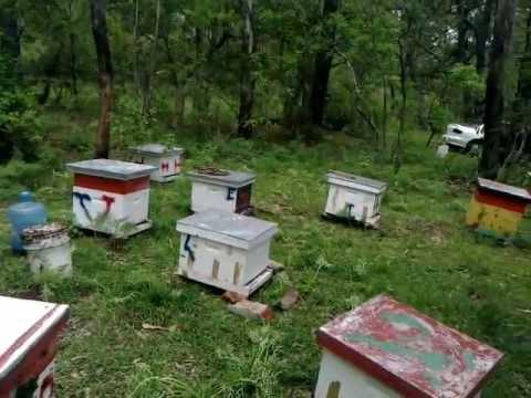 Criador de abejas reinas - Breeder queen bees de YouTube · Duración:  10 minutos 9 segundos  · Más de 10.000 vistas · cargado el 28.05.2010 · cargado por mundoapicola