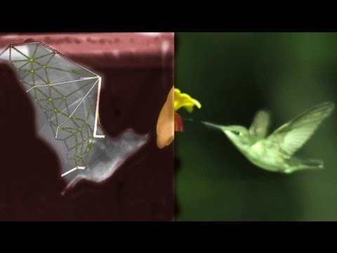 SLOWMO BATS vs BIRDS, with robots, swimming and treadmills – Smarter Every Day 87