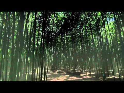 울산시(Ulsan) l 울산12경 십리대숲 광고