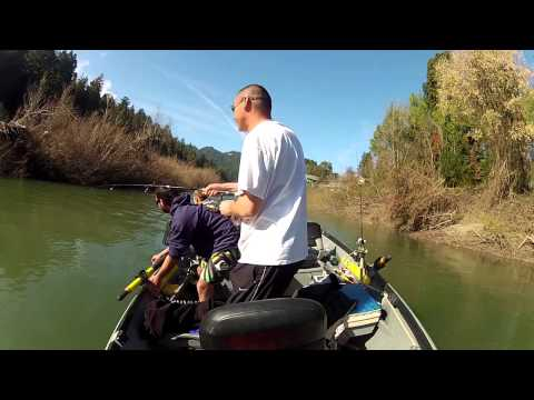 Russian River Steelhead Fishing You Gotta See This Steelhead Almost Jumps In The Boat !