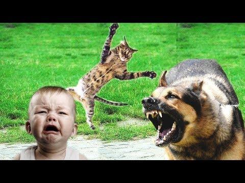 Случаев когда коты кошки за 3 января