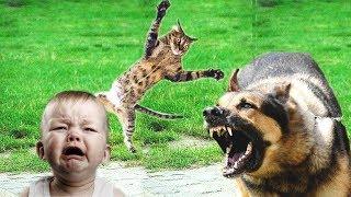 10 случаев когда коты кошки спасли жизнь человеку (Героические кошки) - Смешные кошки МатроскинТВ