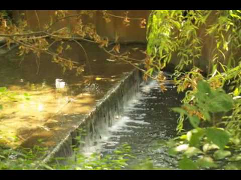 Anderson Japanese Gardens Youtube