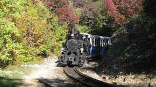 Railway in the shadow of trees / Gyermekvasút: a fák árnyékában