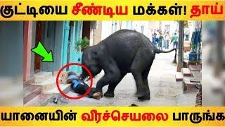 குட்டியை சீண்டிய மக்கள்! தாய்  யானையின் வீரச்செயலை பாருங்க | Tamil News | Tamil Seithigal |