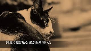 のら猫 香蓮