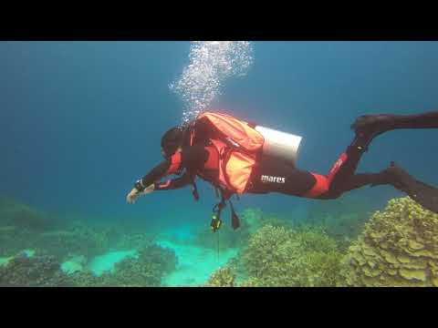 Diving in Coron-Busuanga impression from our diving adventures