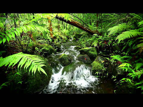 🎧 Relaxing Water Stream & Jungle Sounds - Rainforest Nature
