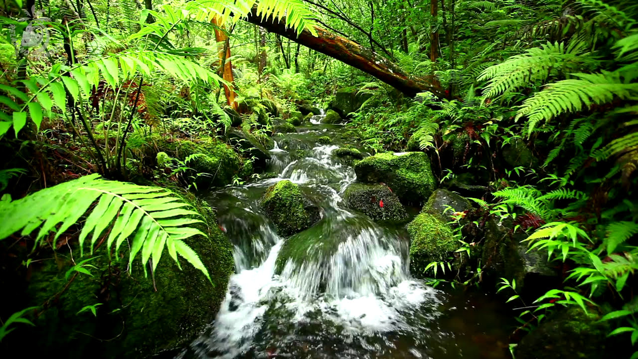 Relaxing Water Stream & Jungle Sounds - Rainforest Nature ...