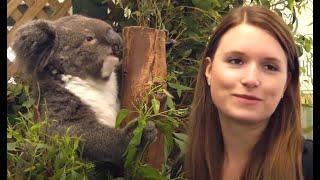 Australia - Cute Koalas and Kangaroos - HD