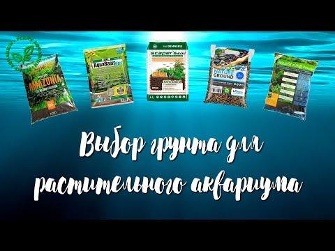 Вопрос: В аквариуме нет грунта, можно ли посадить растение в емкость?