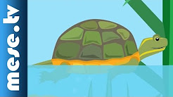 Gryllus Vilmos : Teknősbéka