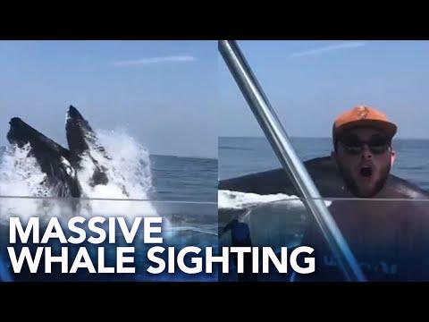 Pennsylvania Man, Son Capture Massive Whale Feeding Off Sea Isle City, New Jersey Coast