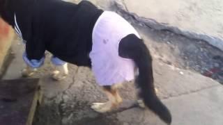 Супер собака одета смешно  смотреть всем