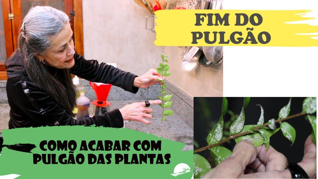 Combatendo pragas nas plantas