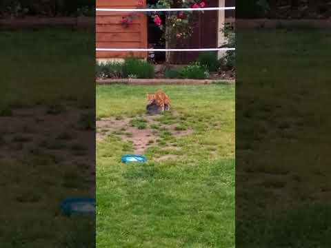 Craquotte (la lapine)et Simon (le chat) en tournage classé X